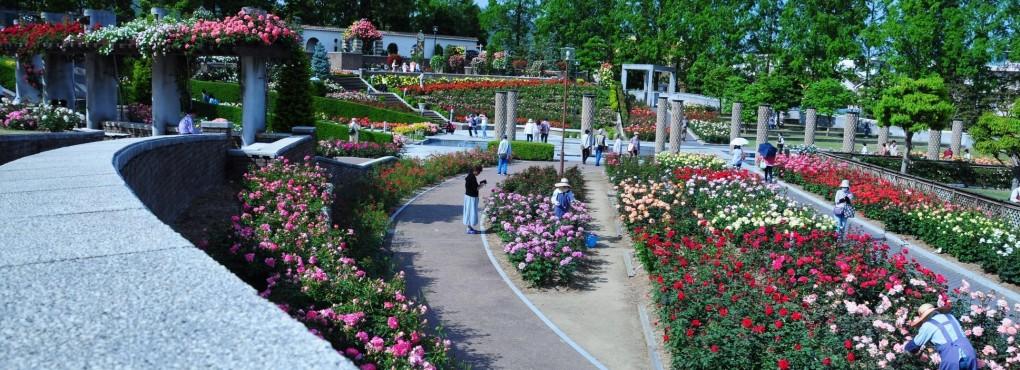荒巻バラ公園
